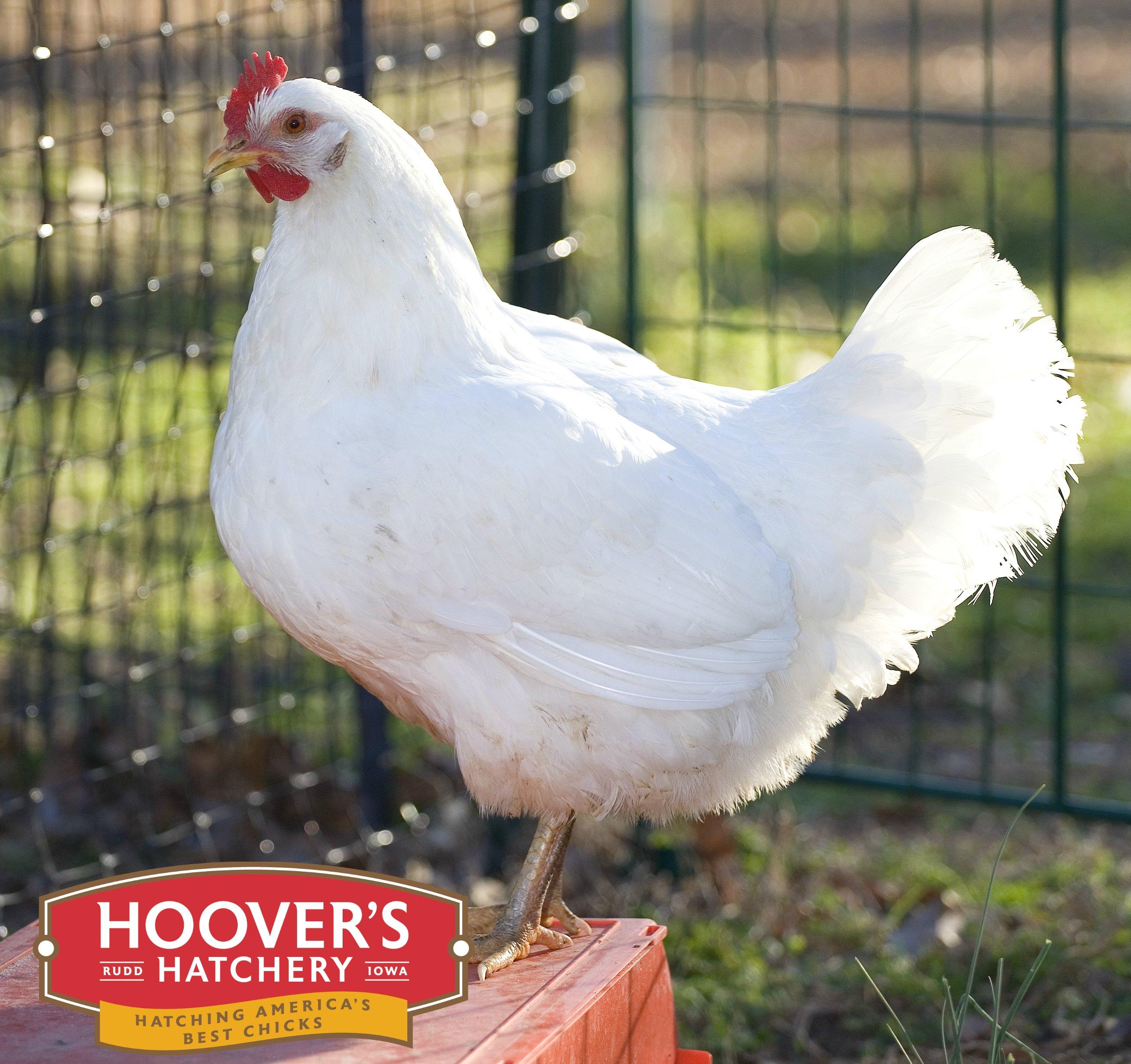 hoover s hatchery